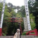 樹齢2000年の大楠に願いを!犬連れ熱海來宮神社