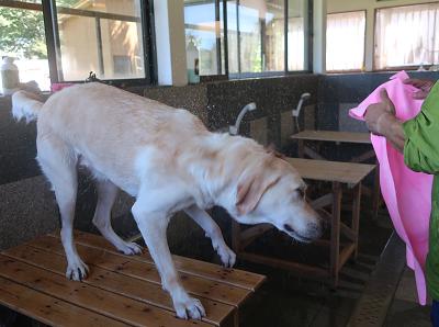ブルブルする犬